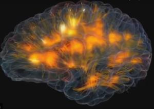feu d'artifice neuronal